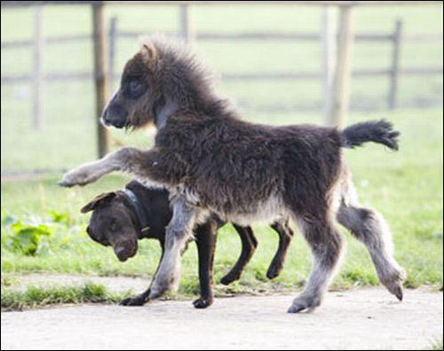 世界上最小的马