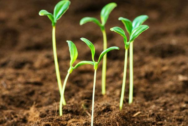 种子为什么会发芽