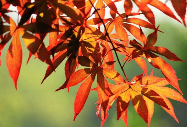 为什么北方的春天和秋天感觉特别短