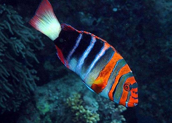 鱼能自由浮沉靠的是什么