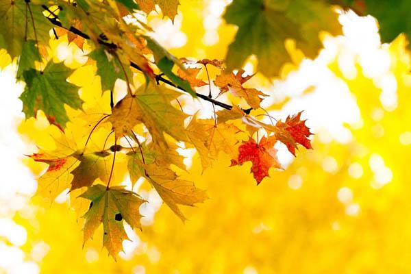 为什么秋天树叶会落