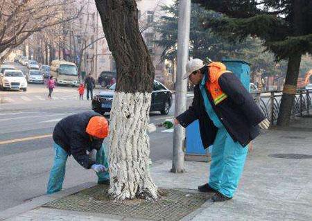 冬天为什么要把树干刷白
