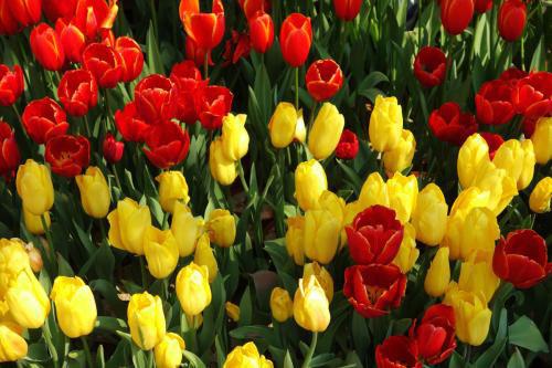 为什么花有各种不同的颜色