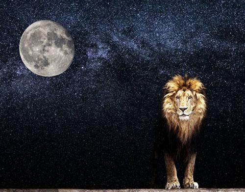 留意月亮 避免被狮子暗杀