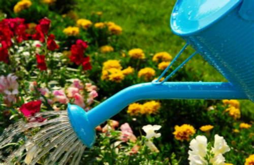 夏天中午为什么不宜给花浇水