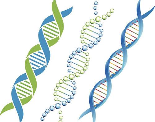 人类有97%的DNA是没有用的