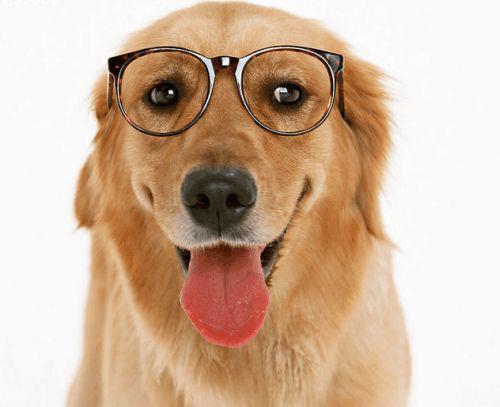 为什么狗鼻子总是湿的