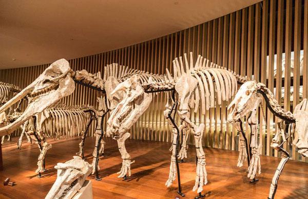 为什么能在地球上找到恐龙的骨骼