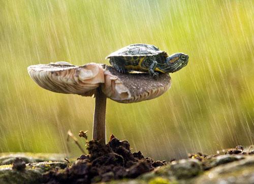 下雨后地上为什么会长出很多蘑菇
