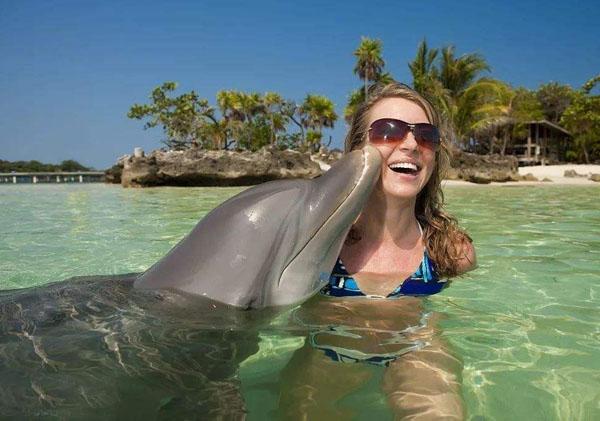 海豚为什么会救人