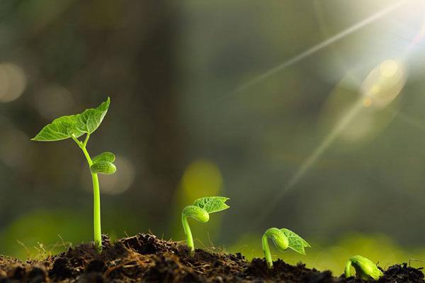 为什么植物的根总是向下长,而茎总是向上长
