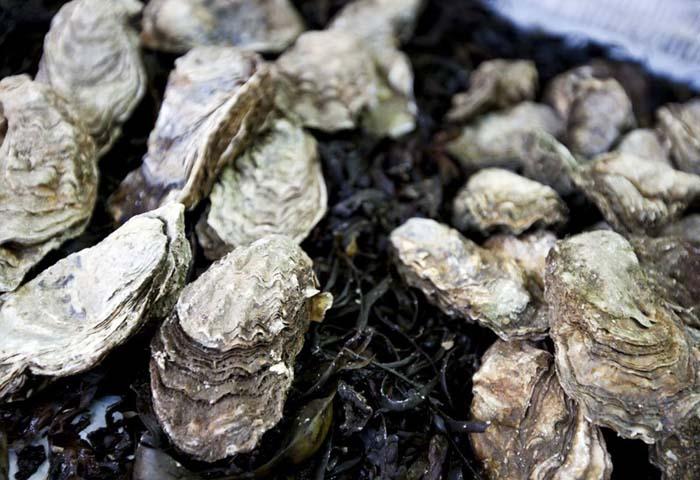 一只牡蛎一天能过滤189升水