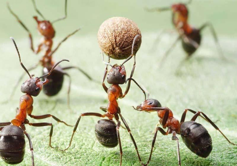 蚂蚁为什么不会迷路