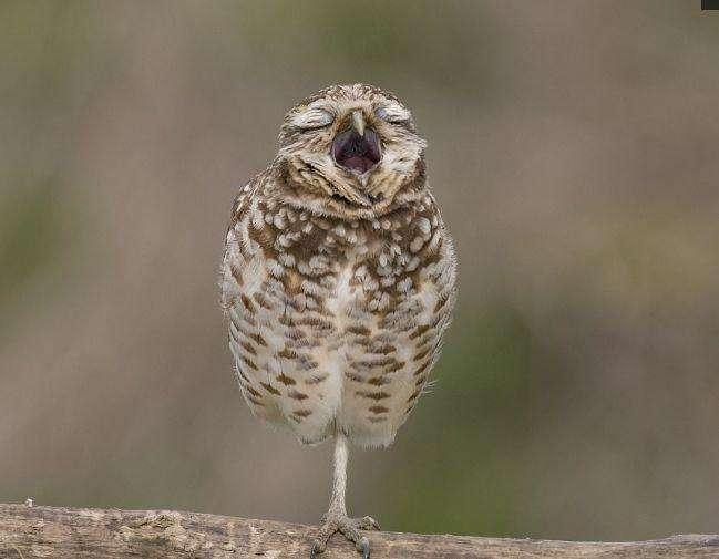 如何让小鸟快速睡觉