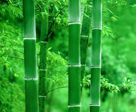 为什么有些植物的茎中间是空的