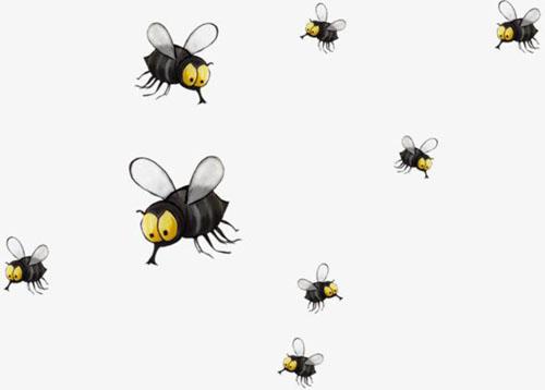 为什么苍蝇经常围绕着顶灯飞