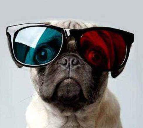 狗不是色盲 能看到蓝色和紫色