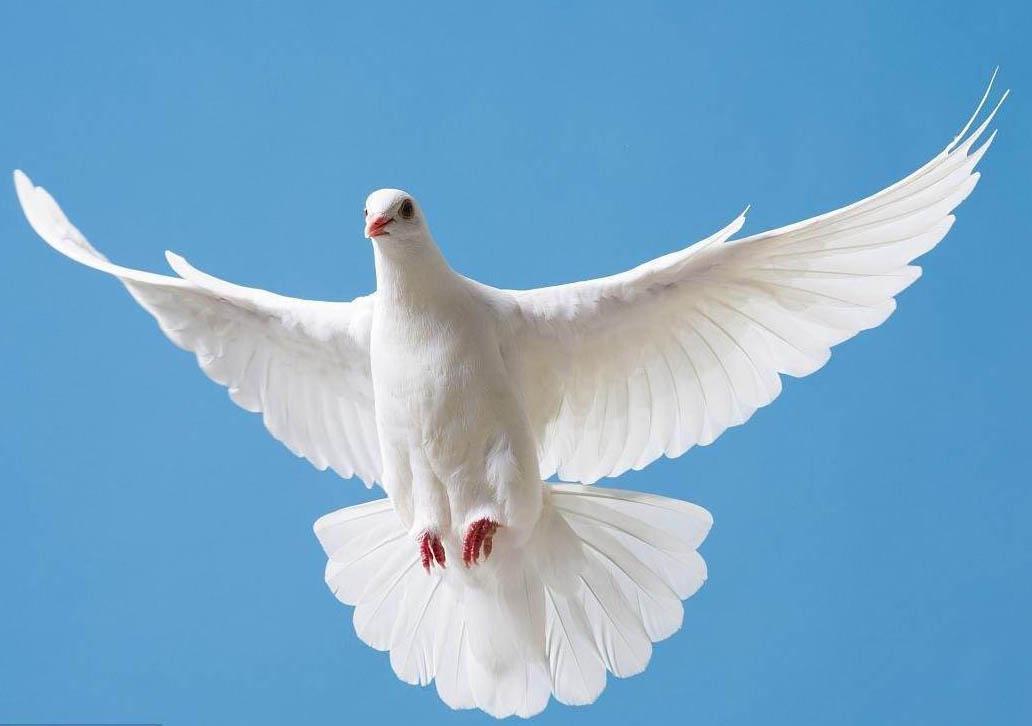 信鸽为什么能送信而不迷路