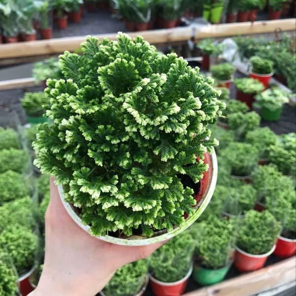 为什么植物有喜阳和喜阴区分