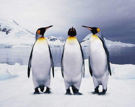 为什么北极没有企鹅