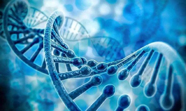 人和人之间有99.9%的基因都相同