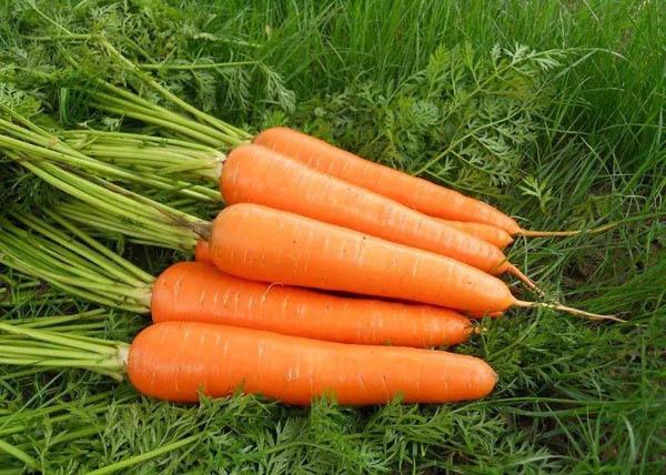 胡萝卜真的不是萝卜