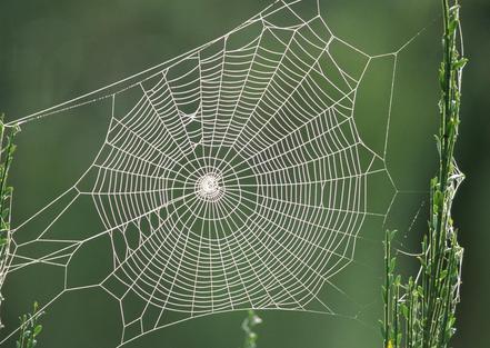 蜘蛛是如何织网的