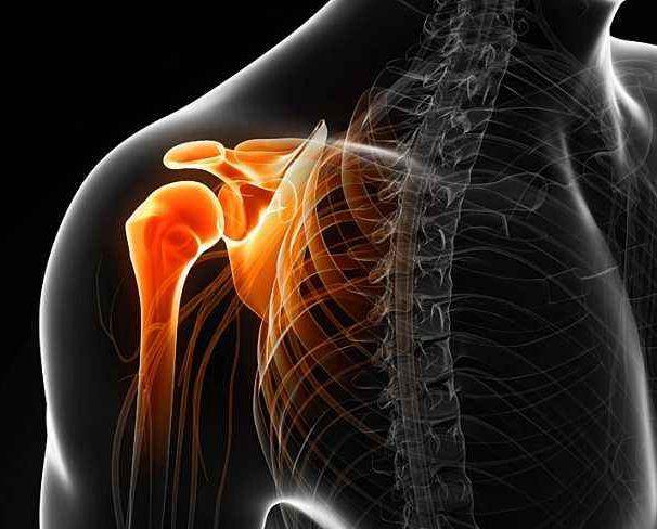 肩关节:人身上运动幅度最大的关节