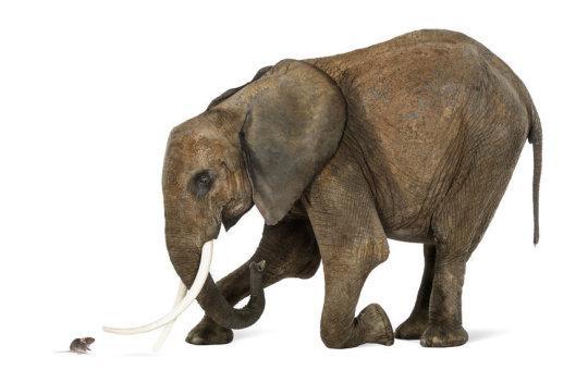 老鼠的精子居然比大象的精子大