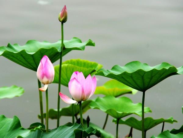 为什么生长在水里的植物不会腐烂