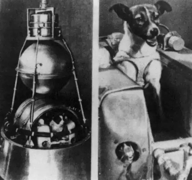 第一只进入太空的狗狗:莱卡