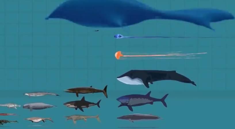 地球上曾出现过的部分海洋生物尺寸比较
